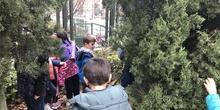 2018_12_05_1º Y 2º TRABAJAN LA BIODIVERSIDAD_PROYECTO THE GREAT PLANT HUNT_CEIP FDLR_Las Rozas 8