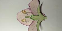 Vídeo elaboración de flores 3