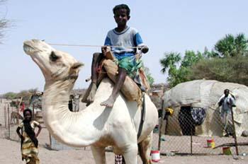 Niño sobre dromedario, Rep. de Djibouti, áfrica