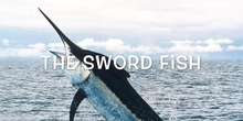 P3_NS The sword fish