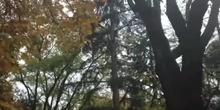 Jardines del CRIF Las Acacias_El Otoño