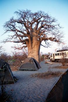 Campamento Planet Baobab, Botswana