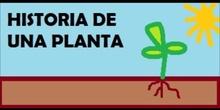 HISTORIA DE UNA PLANTA