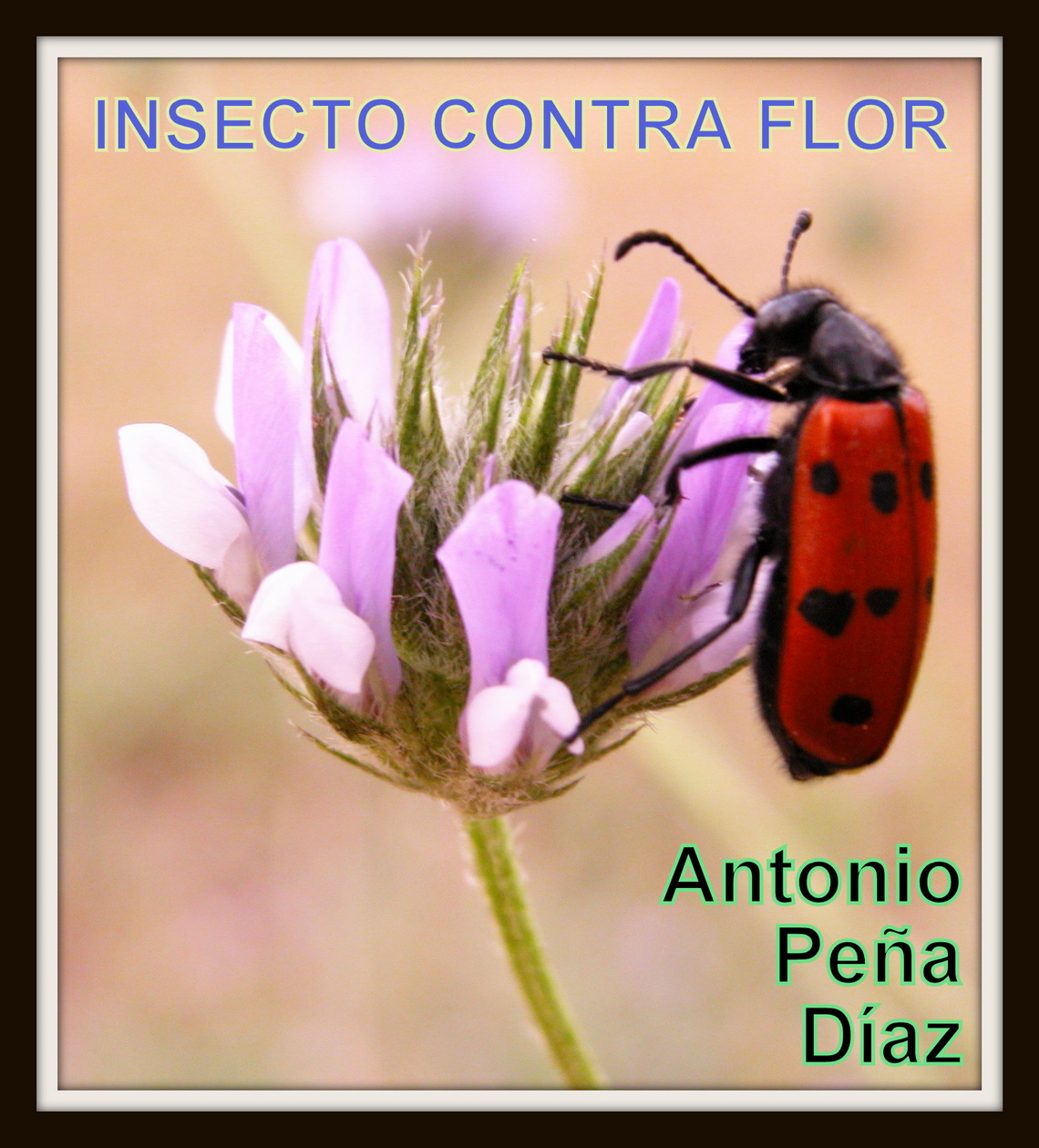 Insecto contra Flor