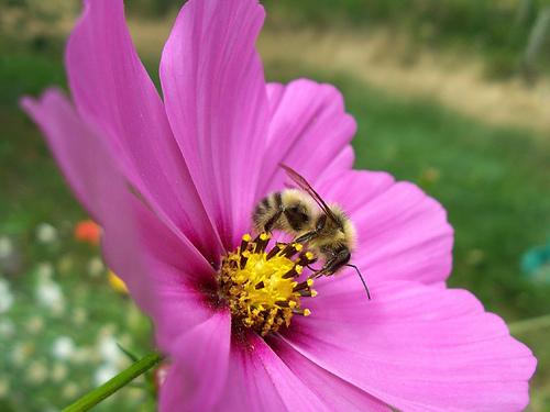 Flor polinizada por insectos