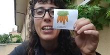 Vegetables talking flashcards