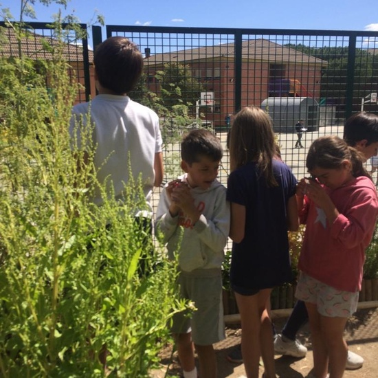 2019_06_11_4º observa insectos en el huerto_1_CEIP FDLR_Las Rozas 4