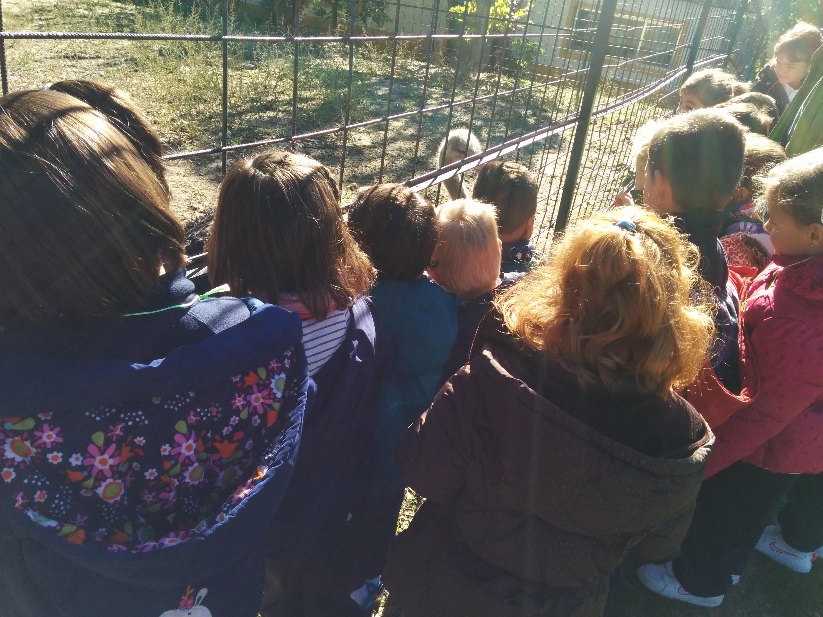 2016_inf 4 años a visita la granja 15