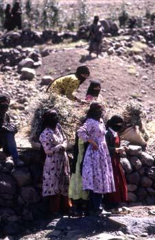 Grupo de mujeres trabajando en el campo, Yemen