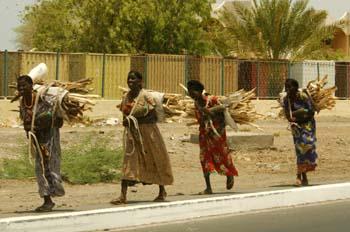 Mujeres transportando madera, Rep. de Djibouti, áfrica