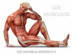 TALLER DE CIENCIAS - CIUDAD PEGASO - Los músculos