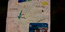 Aquatic Ecosystem 5ºA (by Alejandra, Fernando, Rahela, Marta, Dulce, Luca and Daniel)