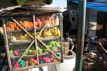 Pollos de colores, mercado de pájaros, Jogyakarta, Indonesia