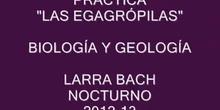 "IES LARRA ACH NOCTURNO "" EGAGRÓPILAS"""