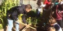 2019_11_05_El huerto en otoño_CEIP FDLR_Las Rozas 5