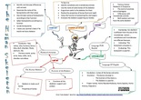 MINDMAP THE HUMAN SKELETON