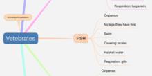 P2_NS Mind map vertebrates