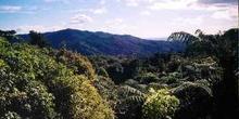 Valle cubierto de bosque tropical, Nueva Zelanda