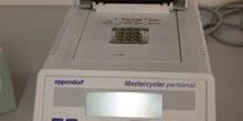 Aparato de Electroforesis