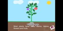 PRIMARIA 2ºCIENCIAS DE LA NATURALEZAPARTS OF PLANT