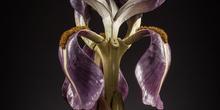 IES_SANISIDRO_MUSEO_Botanica_032