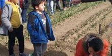 1º de Primaria_Plantamos garbanzo  2