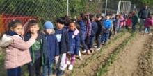 1º de Primaria_Plantamos garbanzo  7