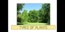 PRIMARIA - 1º - TYPES OF PLANTS - CIENCIAS DE LA NATURALEZA - FORMACIÓN