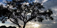 Amanecer en Australia central