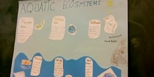 Aquatic Ecosystem 5ºA (by Mohamed, Héctor and David)