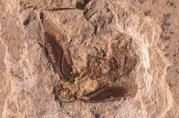 Cucaracha (Insecto) Cretácico