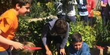 2019_05_Los alumnos de 4º en el Huerto_CEIP FDLR_Las Rozas 6