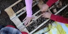 2020_11_27_tercero construye un hotel de insectos_CEIP FDLR_Las Rozas