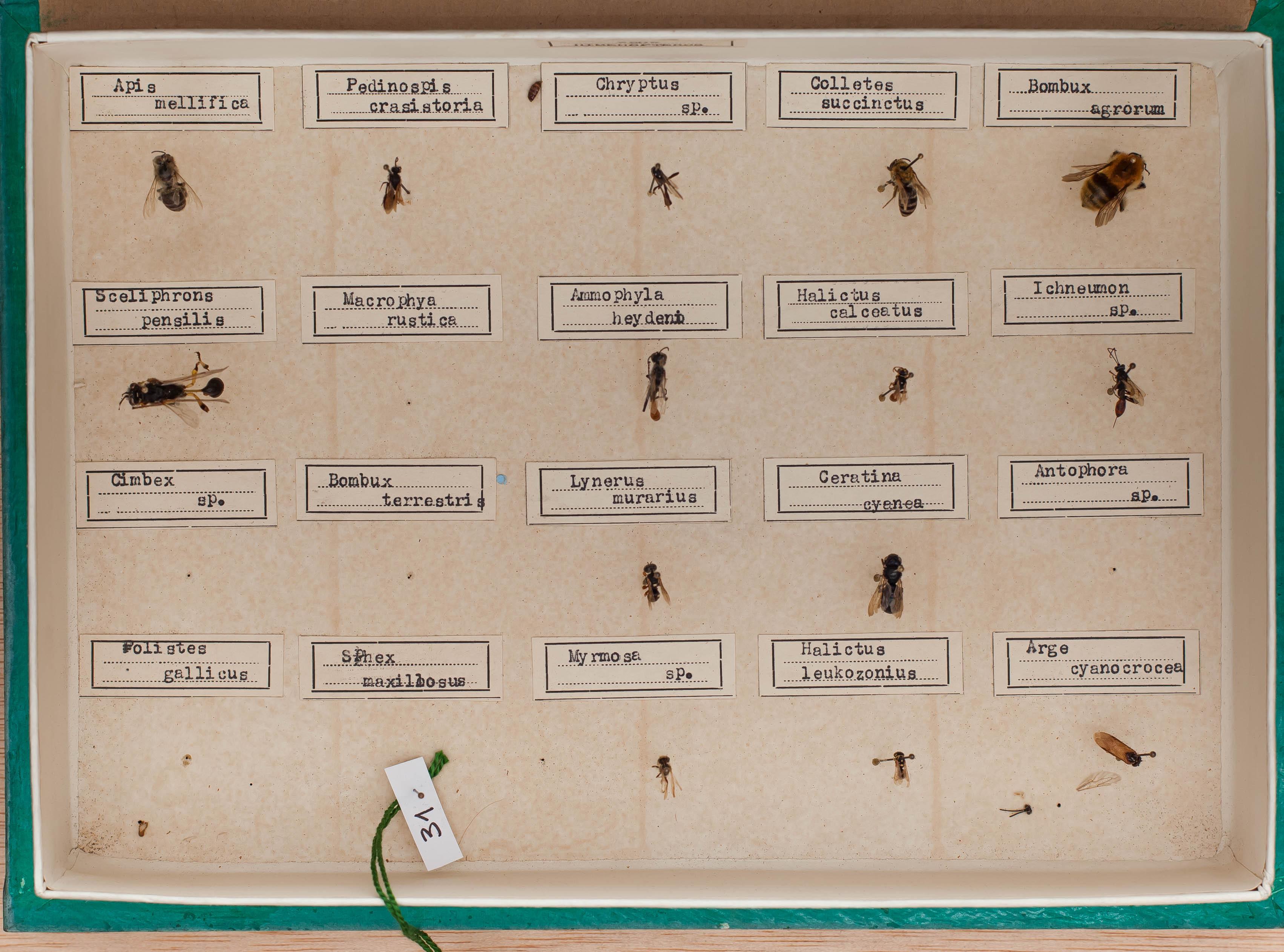 IES_CARDENALCISNEROS_Insectos_016