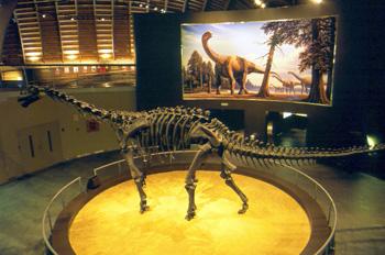 Camarasaurus (Dinosauria, Sauropoda), Museo del Jurásico de Astu