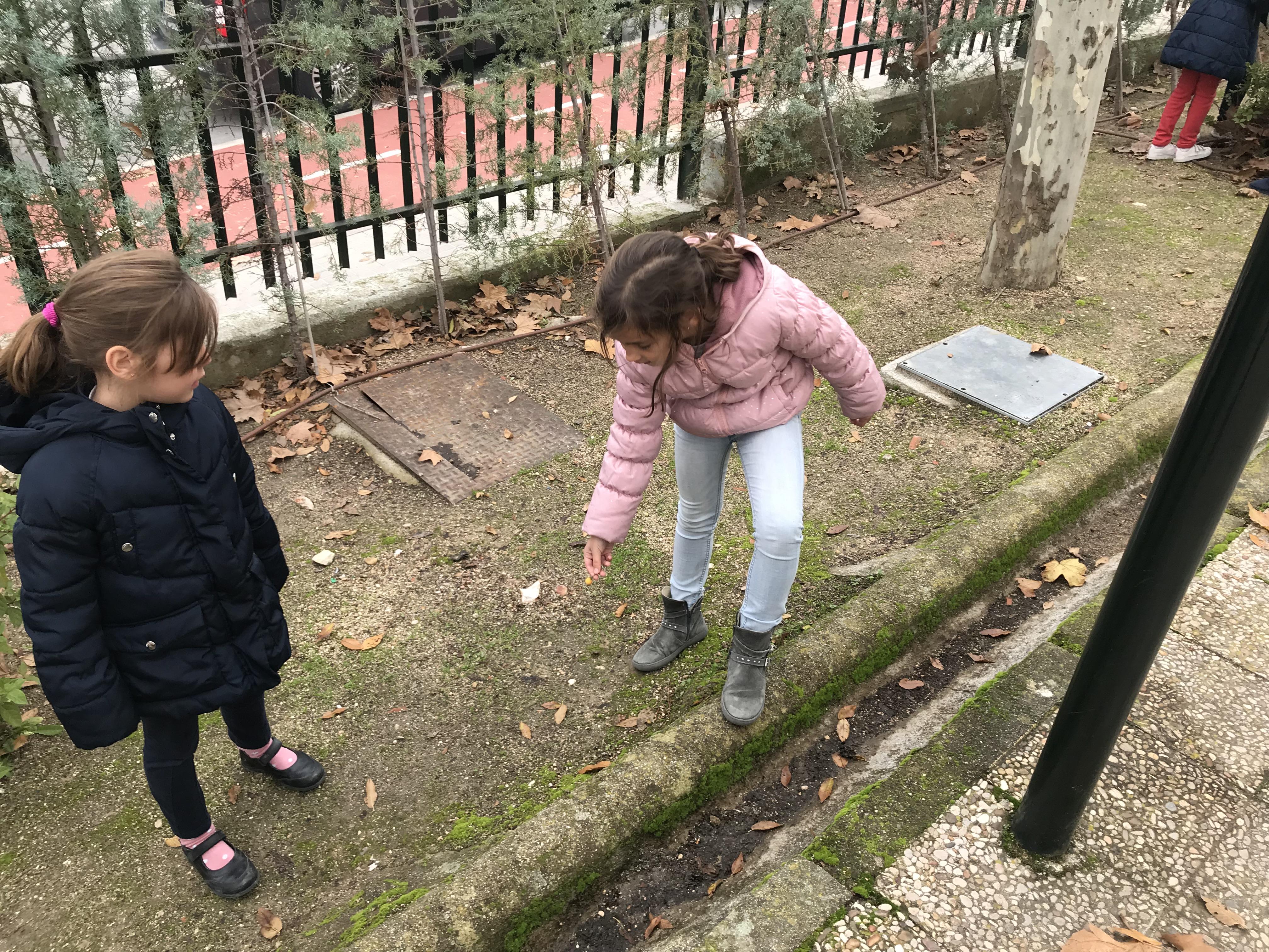 2018_12_05_1º Y 2º TRABAJAN LA BIODIVERSIDAD_PROYECTO THE GREAT PLANT HUNT_CEIP FDLR_Las Rozas 7