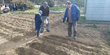1º de Primaria_Plantamos garbanzo  11