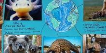 Proyecto animales en extinción 2