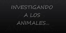 Investigando animales