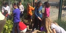 2019_05_Los alumnos de 4º en el Huerto_CEIP FDLR_Las Rozas 28
