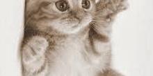 Imagen gato modificada.