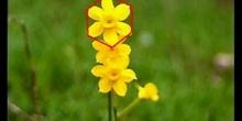 La naturaleza y la geometría (Flor pent 3 ESO)