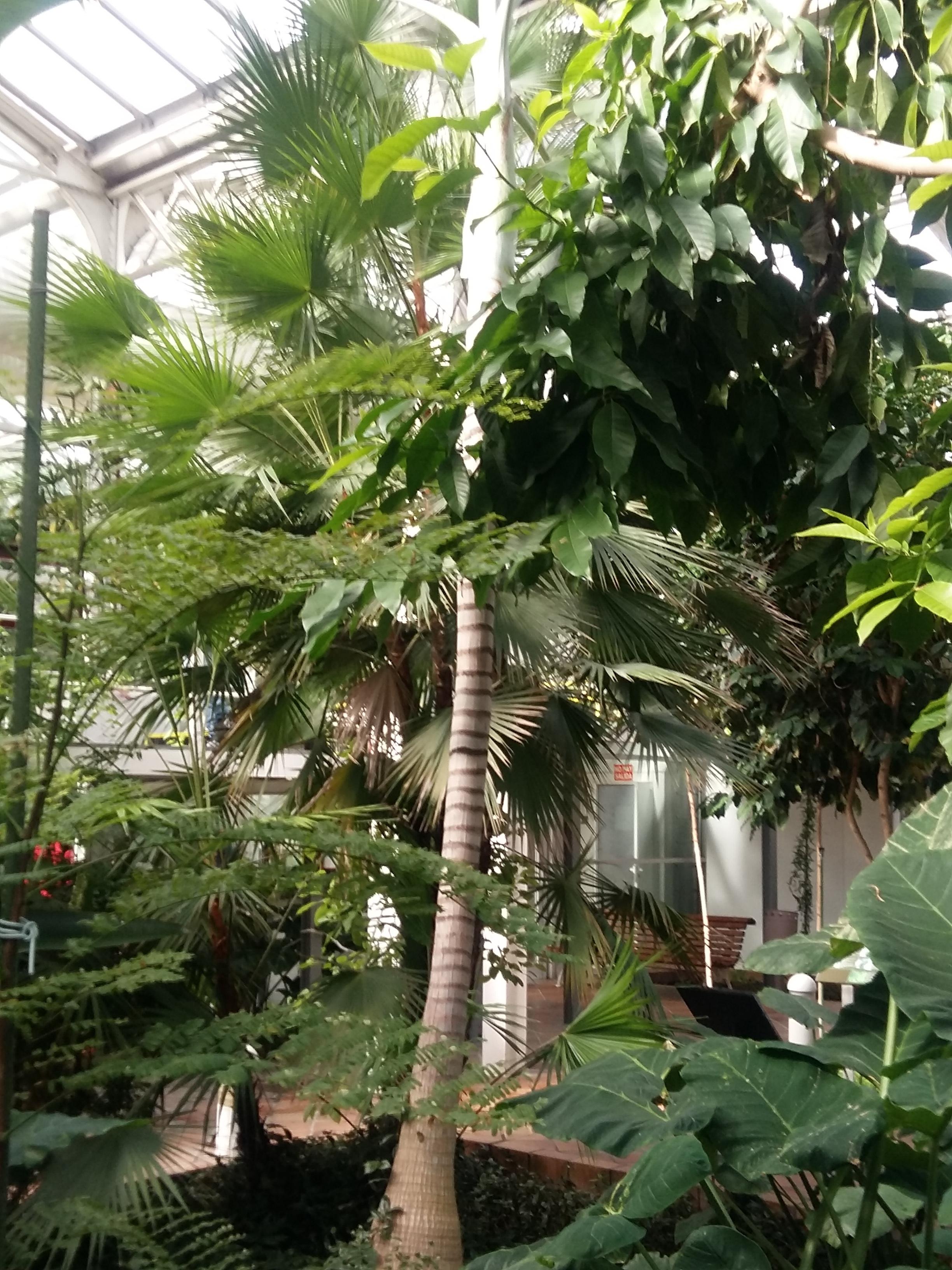 PLANTS 30