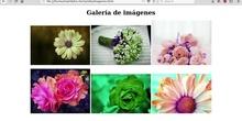 Web imagenes