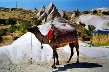 Camello, Capadocia, Turquía