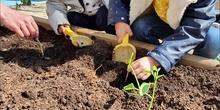 Semana del Medio Ambiente en Infantil 3- 4 años