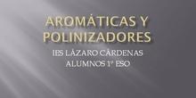 Aromáticas y Polinizadores curso 2020-2021