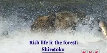 Rich life in the forest: The Shiretoko Peninsula in Hokkaido: UNESCO Culture Sector