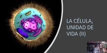 Tema 4 La célula, unidad de vida (III)