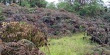 Bosque de helechos y cacaotillo, Ecuador